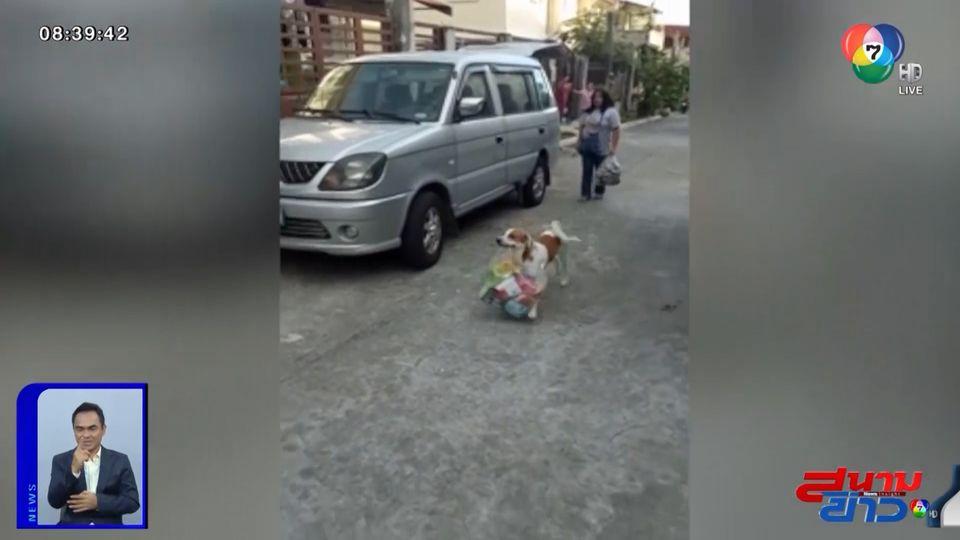 ภาพเป็นข่าว : คนรักสุนัขใจละลาย! สุนัขแสนรู้ช่วยเจ้าของยกของเข้าบ้าน