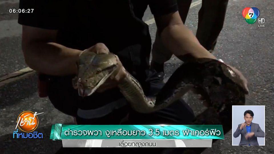 ตำรวจผวา! งูเหลือมยาว 3.5 เมตร ฝ่าเคอร์ฟิวเลื้อยกลางถนนตัดหน้ารถสายตรวจ