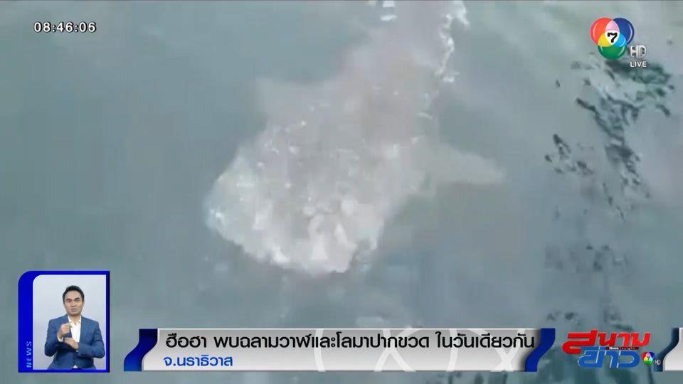 ภาพเป็นข่าว : ฮือฮา! พบฉลามวาฬและโลมาปากขวดในวันเดียวกัน จ.นราธิวาส