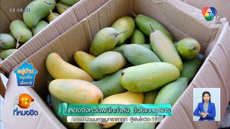 สองจังหวัดผนึกกำลัง ช่วยเกษตรกรขายมะม่วงมหาชนกราคาถูก สู้พิษโควิด-19