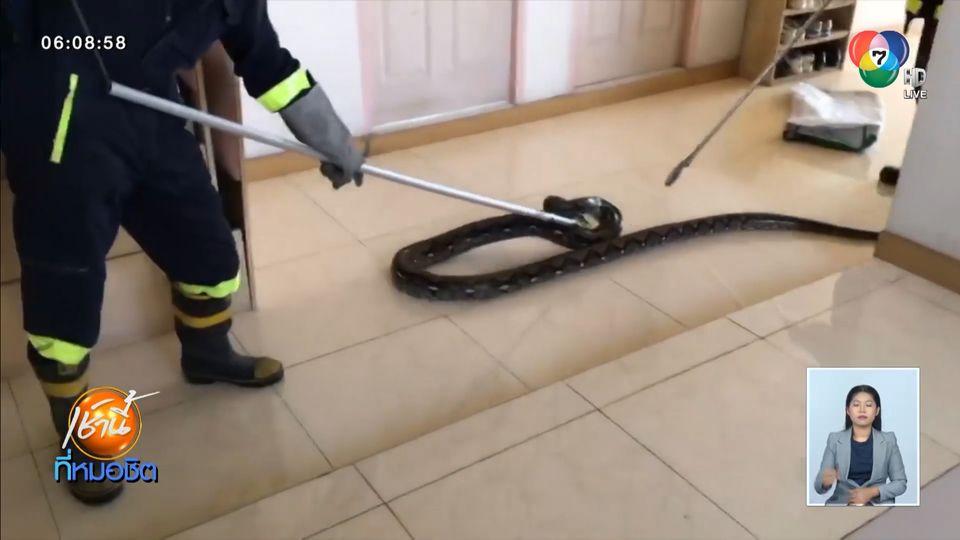 เจ้าของห้องช็อก งูเหลือมตัวใหญ่ เลื้อยขึ้นมาบนระเบียงชั้น 4