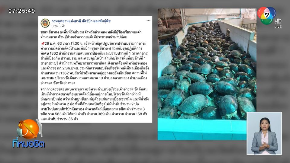 จนท.อุทยานฯ ตรวจวัดดังอ่างทอง พบเต่าจำนวนมากแออัดล้นบ่อ