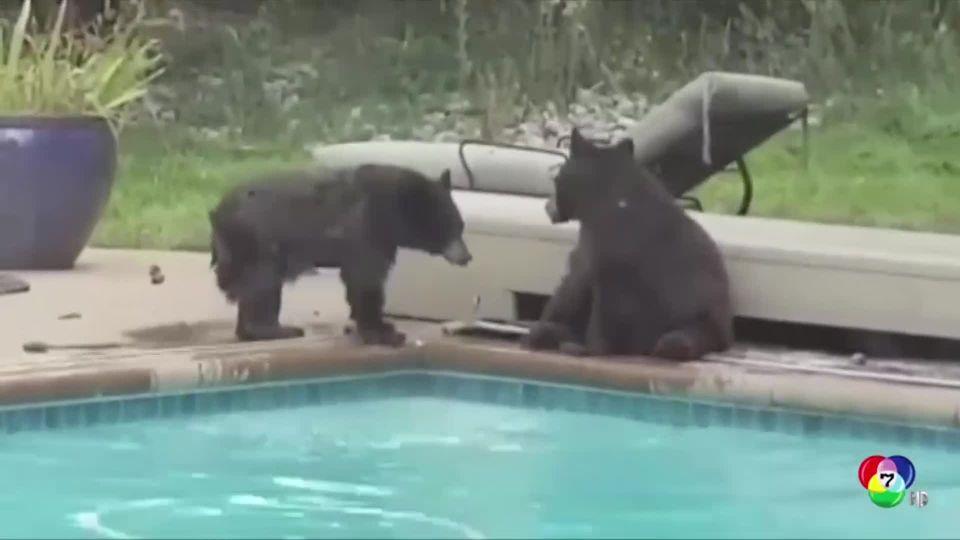 เจ้าของบ้านเผยภาพลูกหมี 2 ตัว แอบเล่นน้ำในสระ ที่สหรัฐฯ