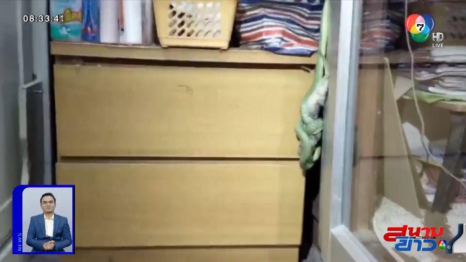 ภาพเป็นข่าว : เจ้าของบ้านผงะ! เจองูเขียวกำลังกินตุ๊กแกในบ้าน
