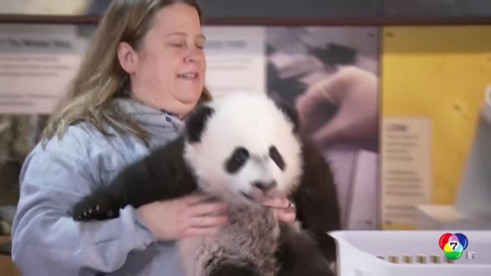 สวนสัตว์สหรัฐฯ เตรียมอำลาแพนด้ายักษ์ เป่ย เป่ย กลับจีน