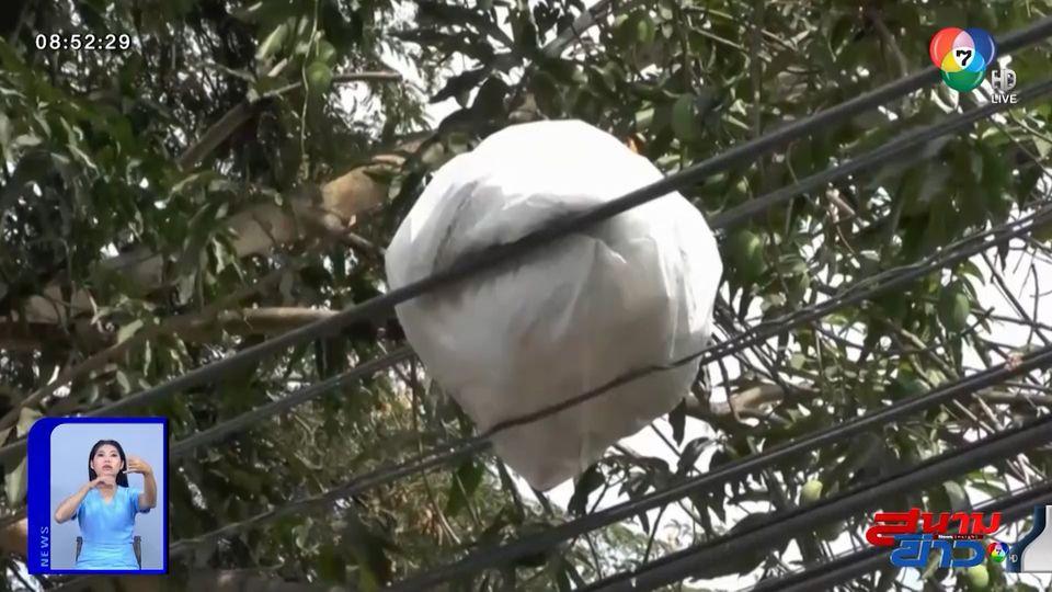 คนมักง่ายโยนถุงขยะทิ้ง ค้างเติ่งบนสายไฟฟ้า ส่งกลิ่นเหม็นรบกวนชาวบ้าน