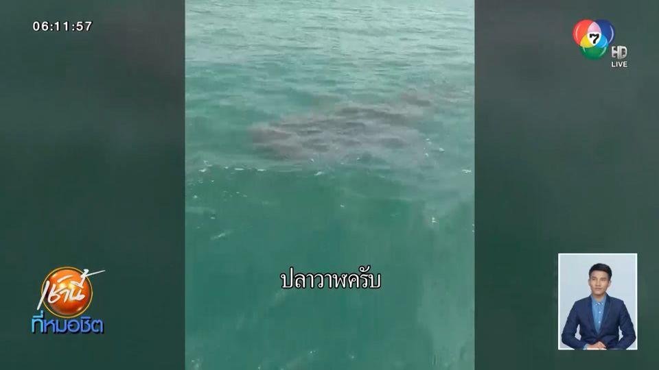 ตื่นตา พบฉลามวาฬตัวใหญ่ โผล่กินปลากลางทะเล ห่างชายหาดชะอำเกือบ 3 กม.