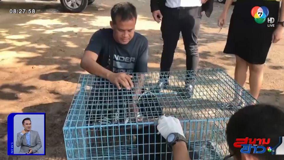 ภาพเป็นข่าว : จนท.ช่วยเหลือสุนัขสีดำที่โดนปาดคอแล้ว จ.ชลบุรี