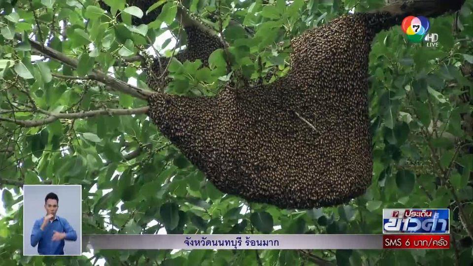 อนุวัตจัดให้ : ภารกิจเสี่ยงตาย! พาลุยตีผึ้งร้อยรัง จ.บุรีรัมย์ ตอน 2