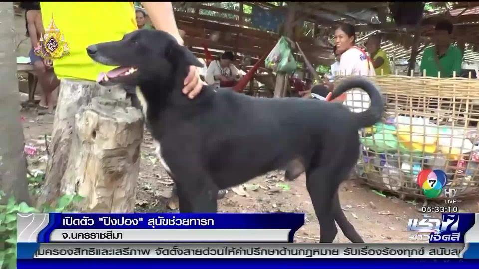 เปิดตัว เจ้าปิงปอง สุนัขพิการช่วยทารก ถูกแม่วัย 15 ปีนำไปฝังดิน