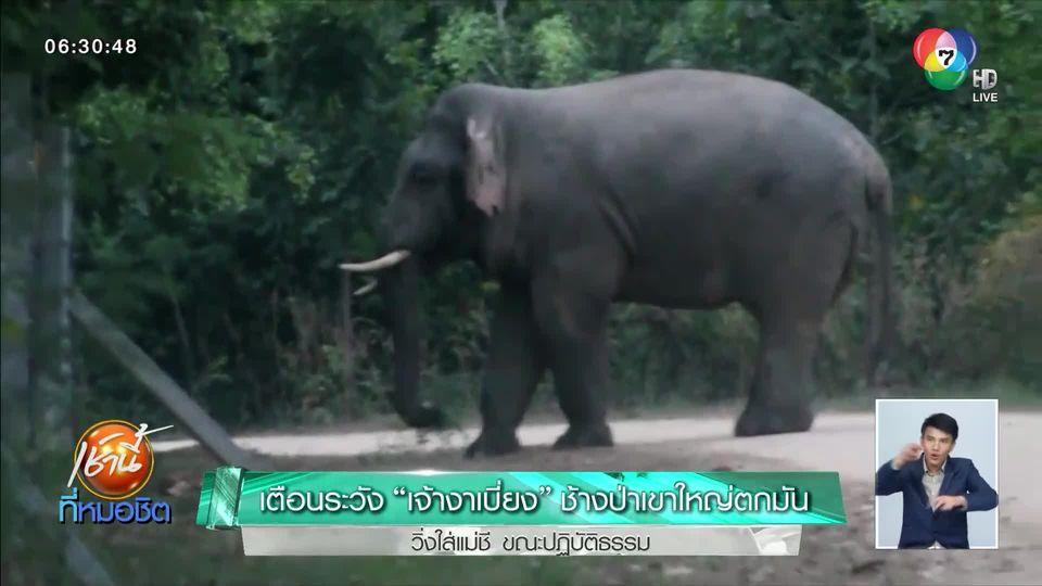 เตือนระวัง เจ้างาเบี่ยง ช้างป่าเขาใหญ่ตกมัน วิ่งใส่แม่ชีขณะปฏิบัติธรรม