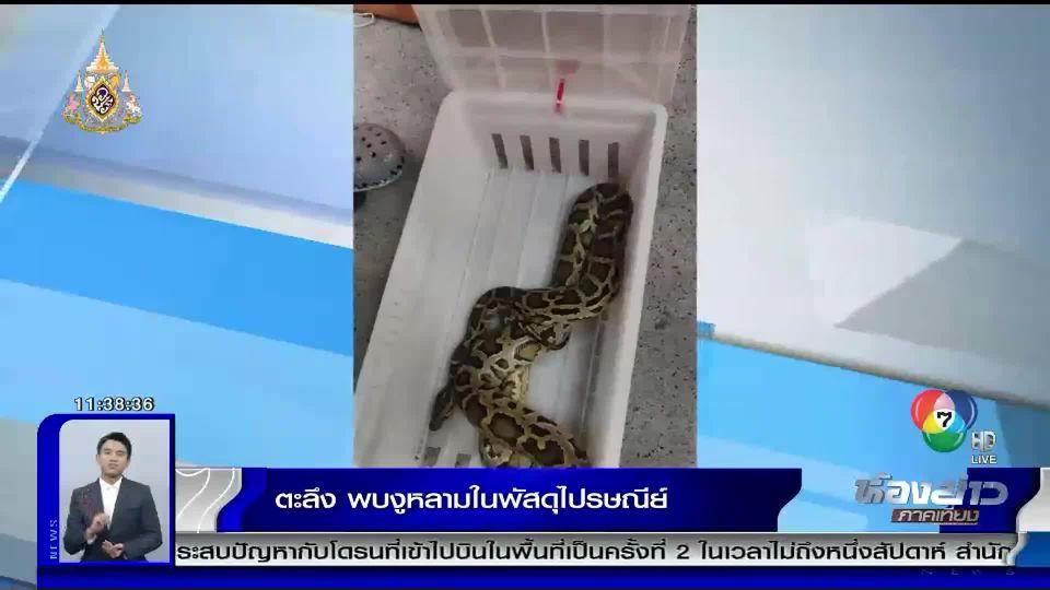 เจ้าหน้าที่ตะลึง พบงูหลามยาว 2 เมตรในพัสดุไปรษณีย์