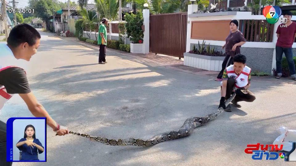 ภาพเป็นข่าว : งูหลามเขมือบแมว นอนขดอยู่ในบ้าน จ.ลำปาง