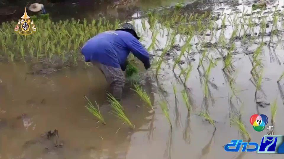 ชาวนาปรับตัวหาแหล่งน้ำสำรอง หลังฝนทิ้งช่วง - 2 เขื่อนใหญ่ลดการระบายน้ำ