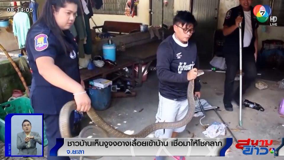 ภาพเป็นข่าว : ชาวบ้านเห็นงูจงอางเลื้อยเข้าบ้าน เชื่อมาให้โชคลาภ