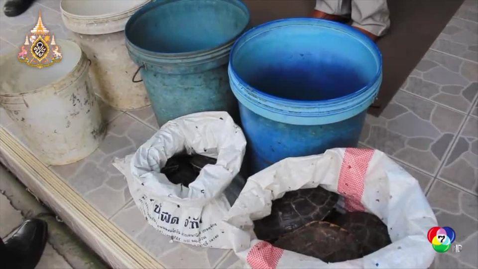 แม่ค้าขายเต่าปากน้ำโพลมแทบจับหลังรู้ค้าสัตว์สงวนโทษสูงสุดถึงจำคุก 4 ปี