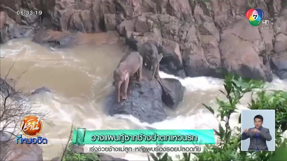 วางแผนกู้ซากช้างป่าตกเหวนรก เร่งช่วยช้างแม่ลูก หลังพบร่องรอยปลอดภัย