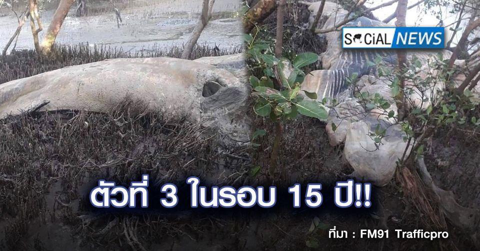 เศร้า! พบซากวาฬบรูด้า ตายลอยเกยตื้นติดฝั่ง จ.สมุทรปราการ ตัวที่ 3 ในรอบ15 ปี