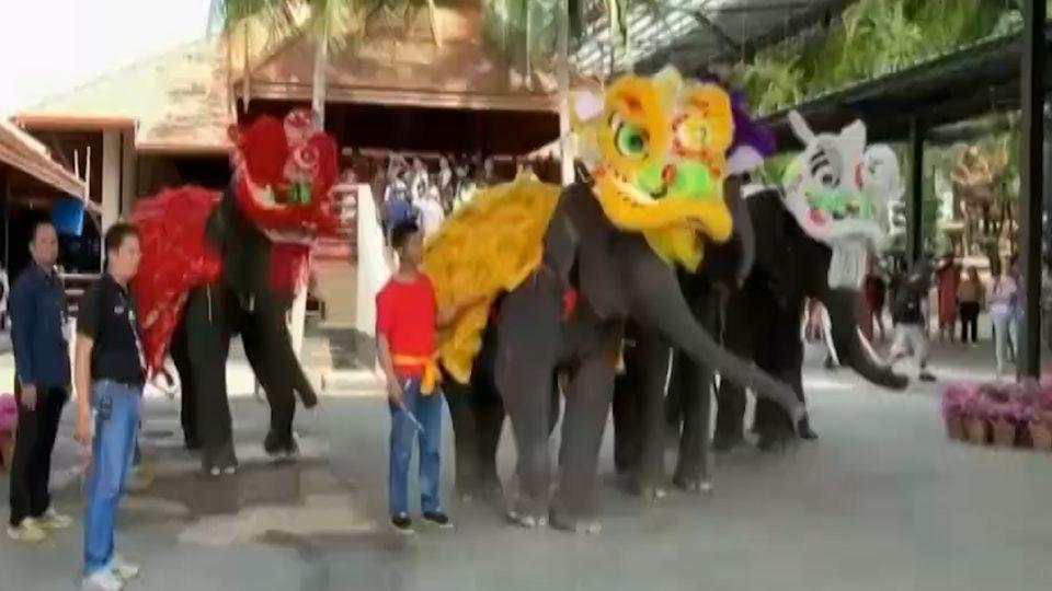 สวนนงนุชพัทยา จัดขบวนช้างเชิดสิงโต รับวันตรุษจีน