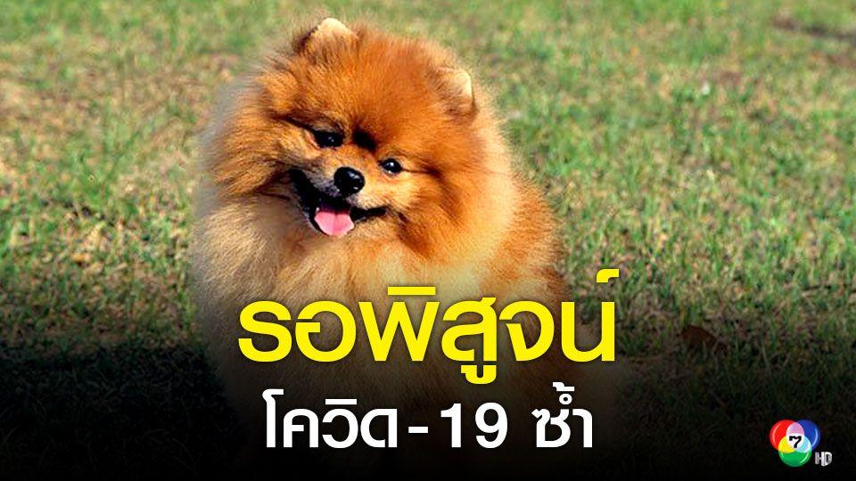 เตรียมตรวจซ้ำ!สุนัขรับเชื้อจากเจ้าของป่วยโควิด 19