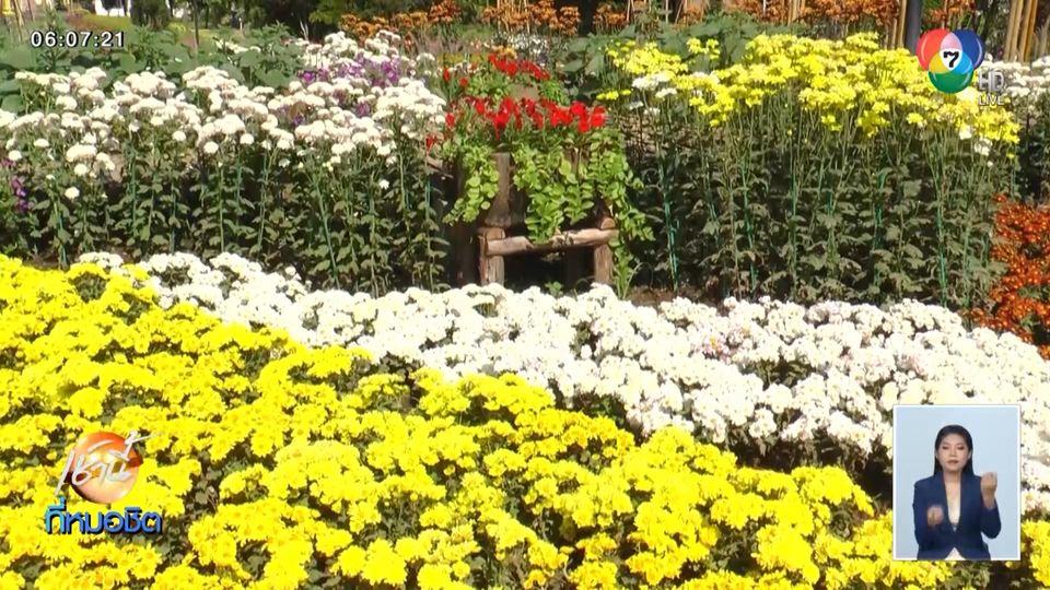 ดอกไม้เมืองหนาวนับล้านดอก เบ่งบานเต็มอุทยานหลวงราชพฤกษ์