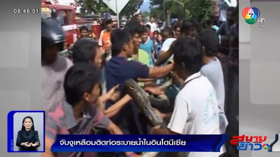 ภาพเป็นข่าว : จับงูเหลือมยาว 6 เมตร ติดท่อระบายน้ำในอินโดนีเซีย