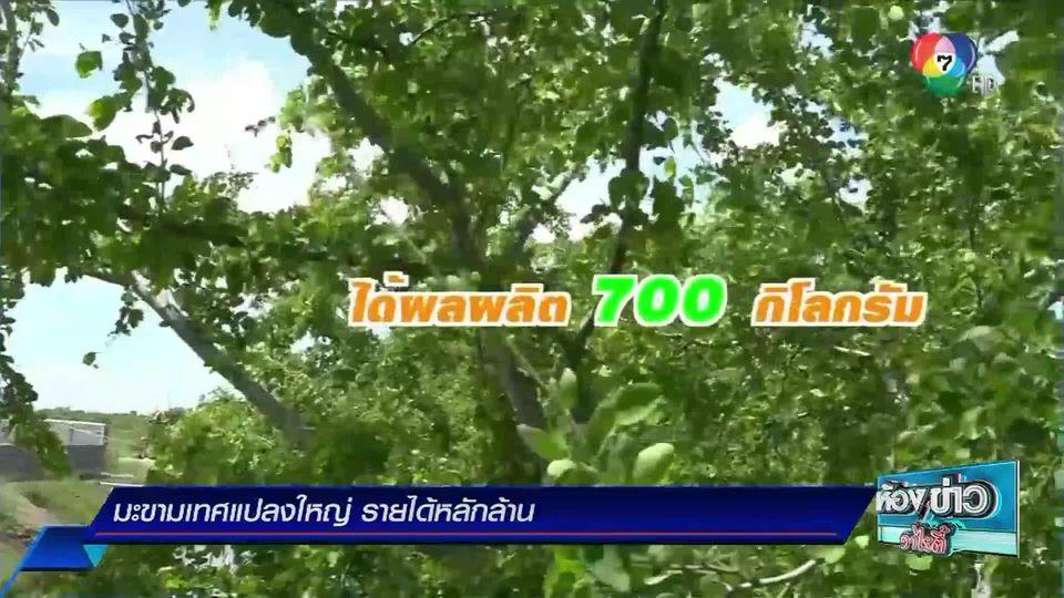 ข่าวเกษตร : มะขามเทศแปลงใหญ่ รายได้หลักล้าน