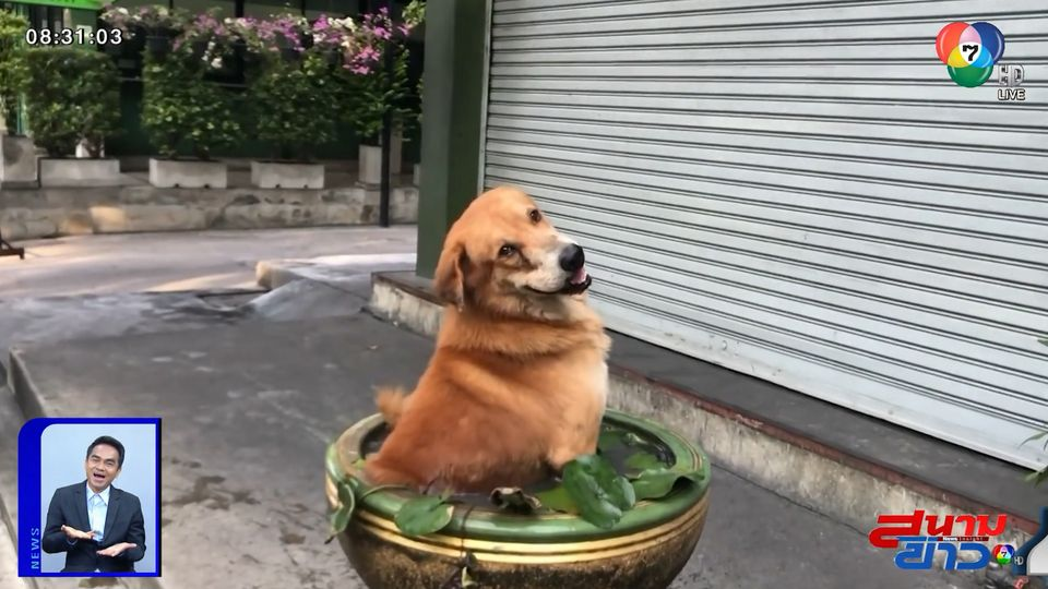 ภาพเป็นข่าว : เอ็นดู! สุนัขขอแช่น้ำคลายร้อนหน่อย