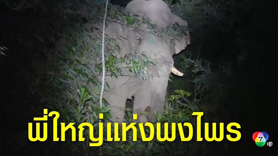 ระทึกช้างป่าเขาใหญ่ บุกกินพืชไร่ชาวบ้าน