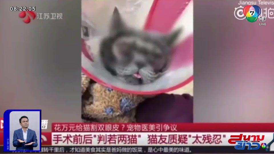 ภาพเป็นข่าว : ชาวเน็ตวิจารณ์ยับ! เจ้าของพาแมวไปทำศัลยกรรมตา 2 ชั้น