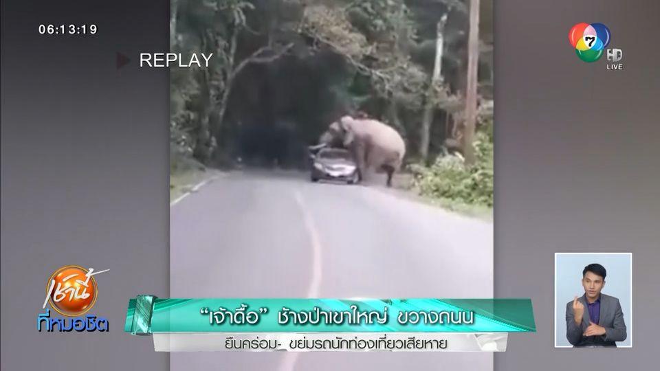 เจ้าดื้อ ช้างป่าเขาใหญ่ขวางถนน ยืนคร่อม-ขย่มรถนักท่องเที่ยว เสียหาย