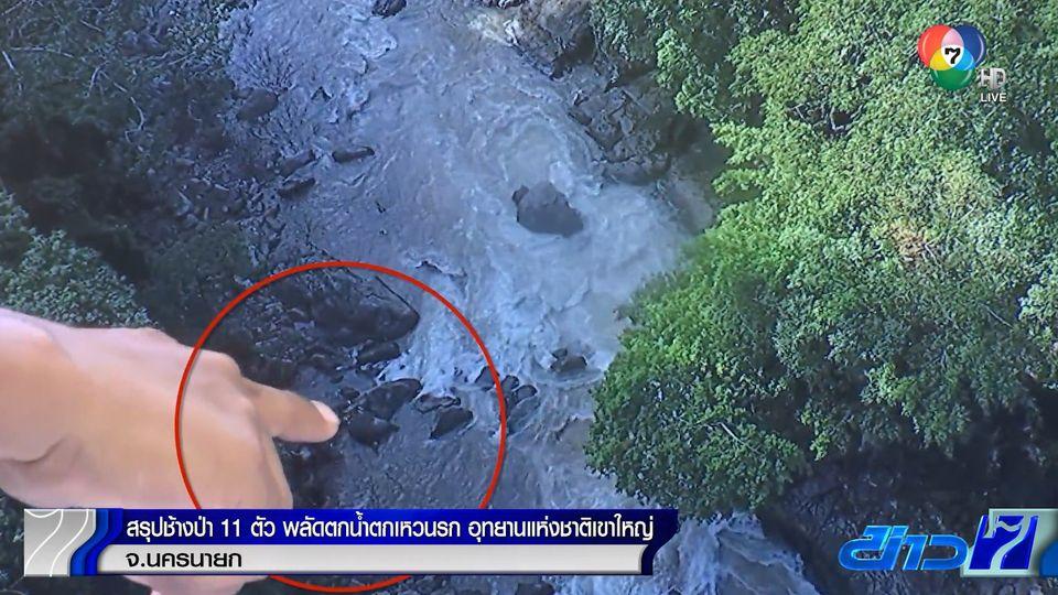 สรุปช้างป่า 11 ตัว พลัดตกน้ำตกเหวนรก อุทยานแห่งชาติเขาใหญ่ จ.นครนายก