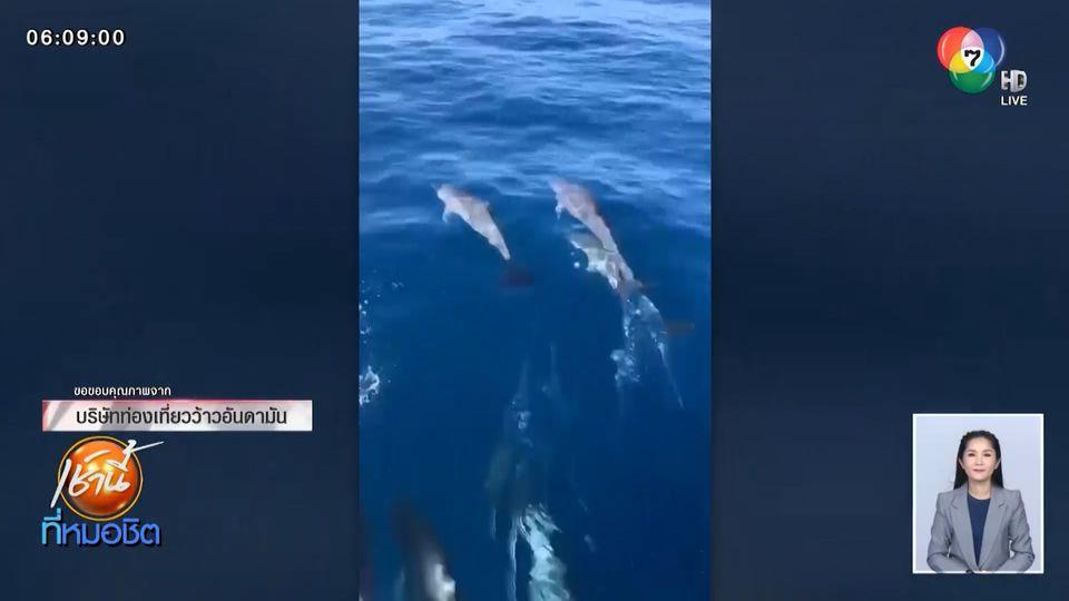 ฮือฮาอีก ฝูงโลมาโผล่ว่ายน้ำข้างเรือท่องเที่ยว ที่หมู่เกาะสิมิลัน จ.พังงา