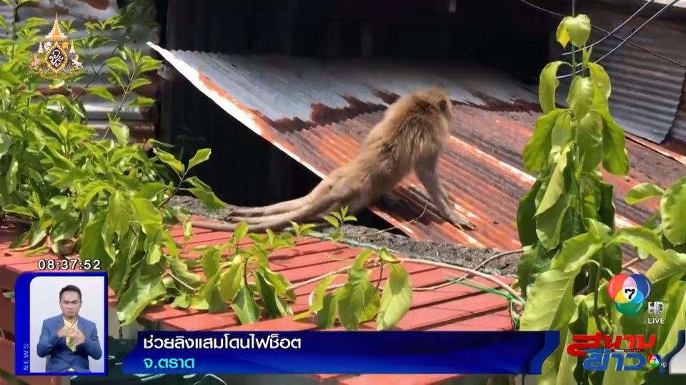 ภาพเป็นข่าว : สุดสงสาร! ช่วยลิงแสมโดนไฟช็อต บาดเจ็บเดินขาลากน่าเวทนา