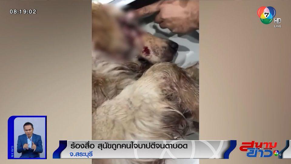 ร้องสื่อ สุนัขถูกคนใจบาปตีจนตาบอด ยังไม่สามารถหาตัวคนทำผิดได้
