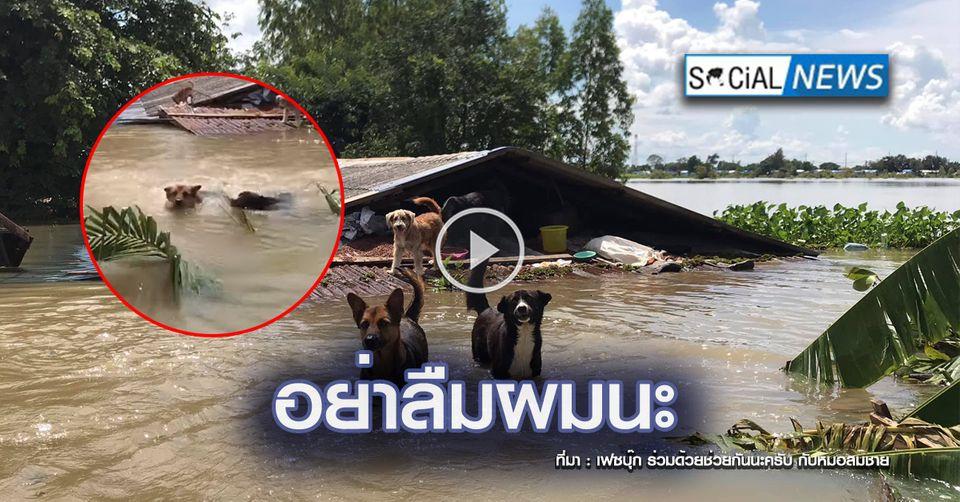 นาทีสะเทือนใจ ฝูงสุนัขบนหลังคาบ้านหนีน้ำท่วม ปรี่เข้าหาเรือกู้ภัยให้ช่วย