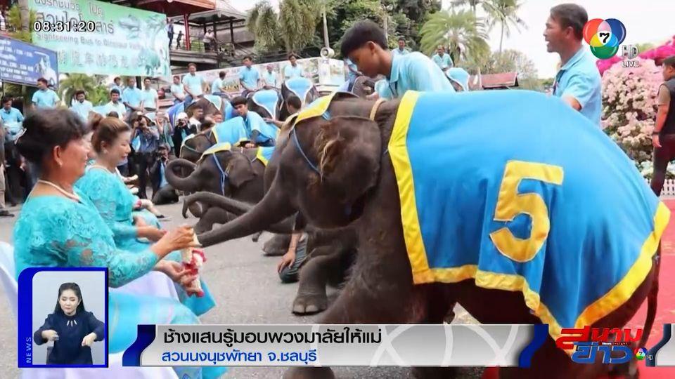 ภาพเป็นข่าว : ช้างแสนรู้สวนนงนุช มอบพวงมาลัยให้แม่