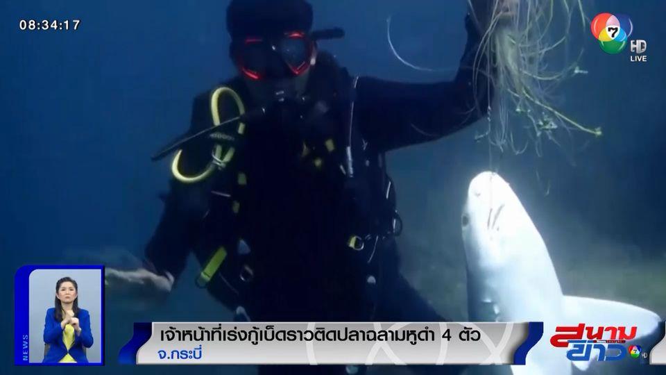 ภาพเป็นข่าว : สุดเศร้า! เจ้าหน้าที่เร่งกู้เบ็ดราวติดปลาฉลามหูดำ ตาย 4 ตัว