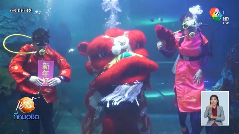 เชียงใหม่ ซู อควาเรียม เชิดสิงโตใต้น้ำ ต้อนรับตรุษจีน