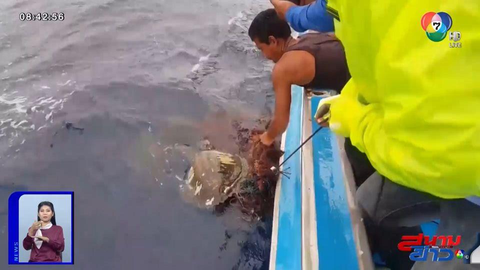 ภาพเป็นข่าว : คลิปสะเทือนใจ! พลเมืองดีช่วยเต่าทะเลติดอวน มีแผลเต็มตัว