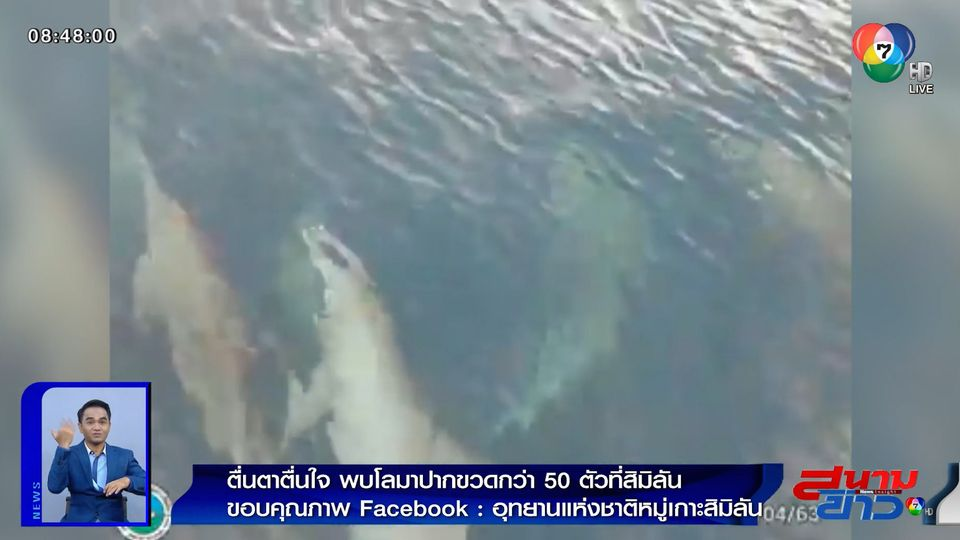 ภาพเป็นข่าว : ตื่นตาตื่นใจ! พบโลมาปากขวดกว่า 50 ตัว ที่หมู่เกาะสิมิลัน