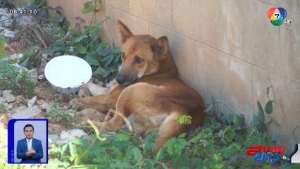 ภาพเป็นข่าว : น่าชื่นชม! พลเมืองดีช่วยเหลือสุนัขนอนซมริมถนนนาน 3 วัน