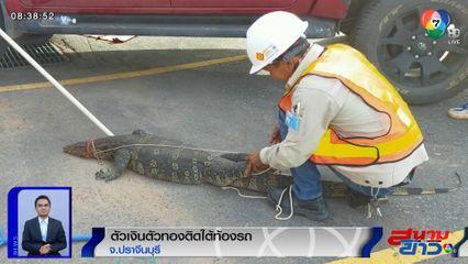 ภาพเป็นข่าว : ฮือฮา! กู้ภัยช่วยตัวเงินตัวทองยาวกว่า 2 เมตร ซุกใต้ท้องรถ
