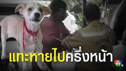 สยอง! ลูกสุนัขพันธุ์บางแก้วแทะใบหน้าศพหายไปครึ่งหน้า