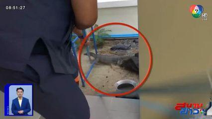 ภาพเป็นข่าว : แม่แมวร้องลั่นให้คนช่วย ตัวเงินตัวทองจ้องจะกินลูกแมว
