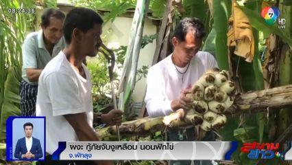 ภาพเป็นข่าว : ผงะ! กู้ภัยจับงูเหลือมยาว 5 เมตร นอนกกไข่เกือบ 20 ฟอง
