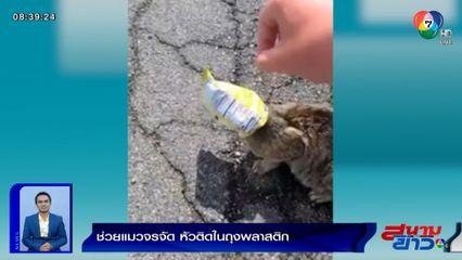 ภาพเป็นข่าว : ทาสแมวใจละลาย! คลิปพลเมืองดีช่วยแมวจรจัด หัวติดในถุงพลาสติก