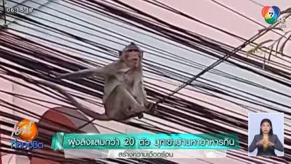 ฝูงลิงแสมกว่า 20 ตัว บุกเข้าบ้านหาอาหารกิน สร้างความเดือดร้อน