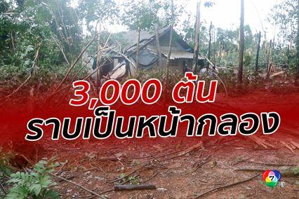 รุนแรงเกินคาด พายุงวงช้างพัดถล่ม ทำต้นยางพาราโค่นกว่า 3 พันต้น
