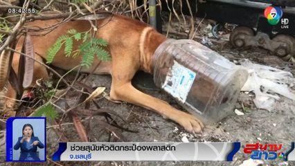 ภาพเป็นข่าว : กู้ภัยช่วยสุนัขหัวติดกระป๋องพลาสติก จ.ชลบุรี